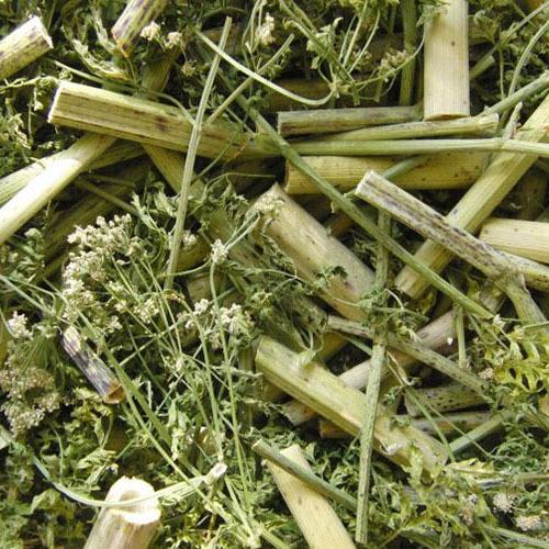 Травы Болиголов пятнистый (Омег) conium-leaf-102.jpg