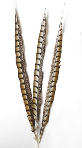Перо фазана ,  длина ок. 90-95 см. (выбрать цвет)