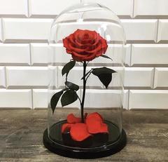 Роза в колбе красная  (VIP)