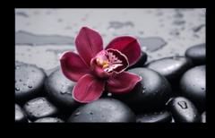 """Постер """"Красная орхидея"""""""