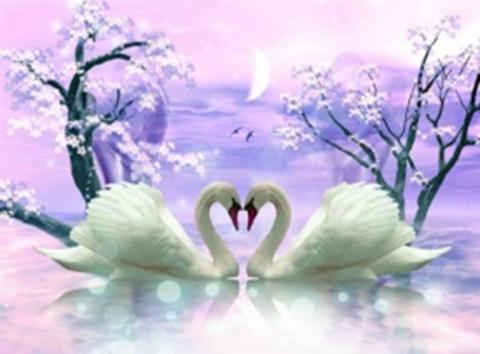 Картина раскраска по номерам 40x50 Лебеди на фиолетовом фоне