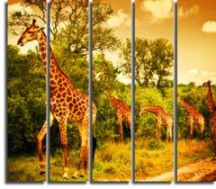 "Модульная картина ""Жирафы"""