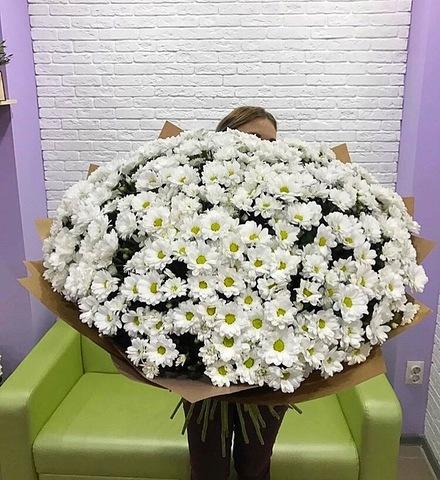 101 кустовая хризантема с оформлением #1663