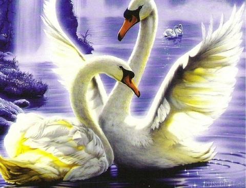 Алмазная Мозаика + Багет 40x50 Игры лебедей (арт. DA-0294)