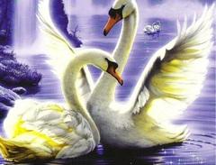 Алмазная Мозаика + Багет 30x40 Игры лебедей