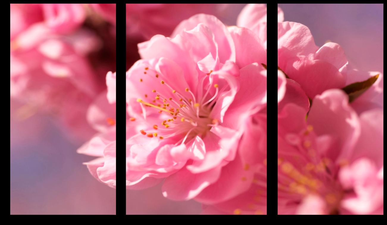 """Модульные картины Модульная картина """"Нежно-розовый цветок"""" М66.png"""