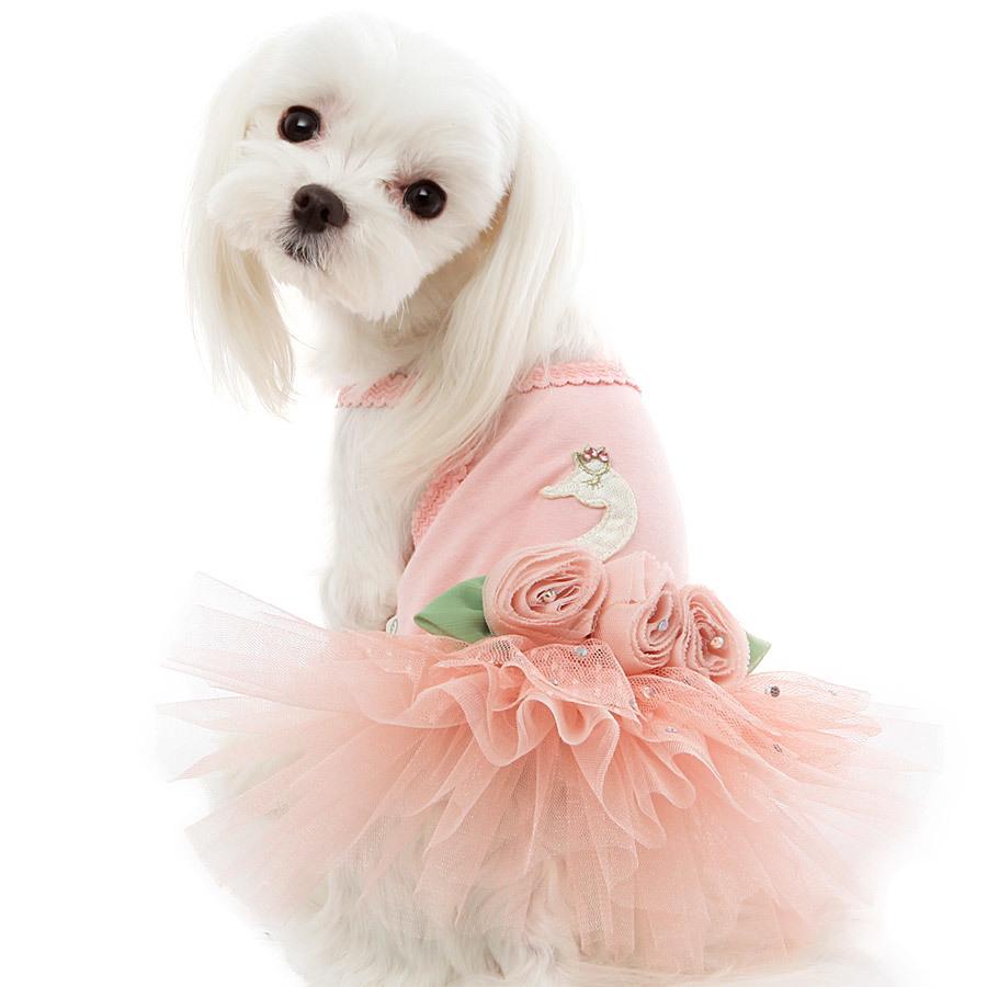 красивое платье для мальтезе