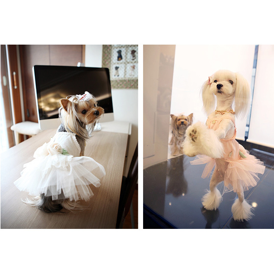 120 PA - Платья для собак
