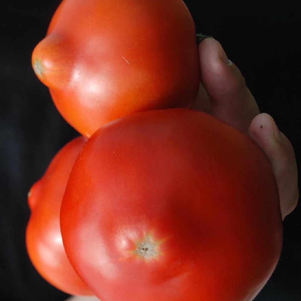 Красный Примо ред F1 семена томата детерминантного (Clause / Клос) примо_ред.jpg