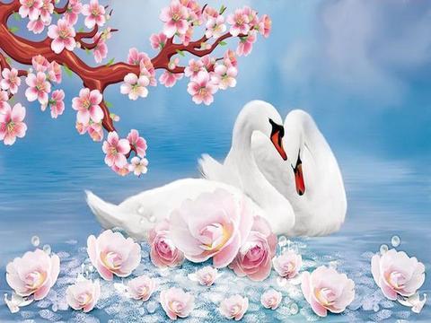 Алмазная Мозаика 40x50 Белые лебеди и веточка сакуры (арт. HWA2849 )