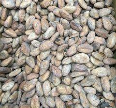 Какао бобы сорт Mexico Zoque Criollo
