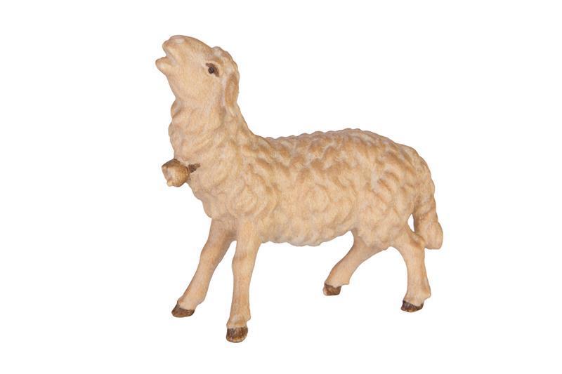 Овца блеющая