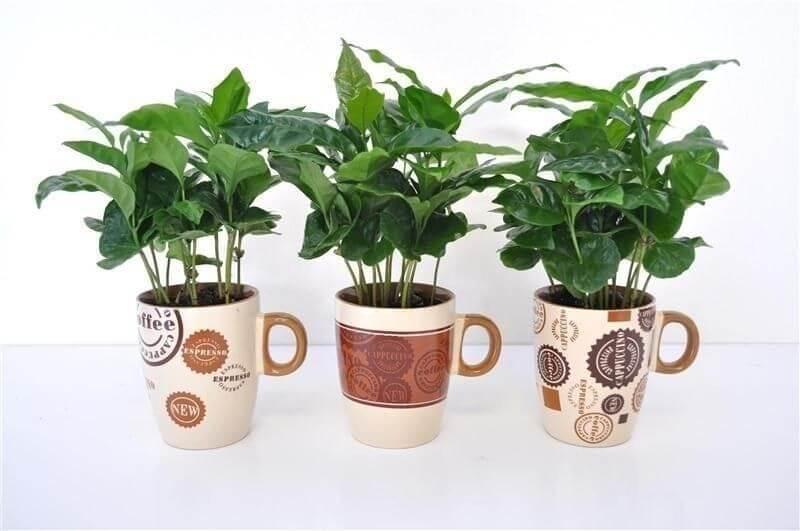 Кофе Арабика в кружке