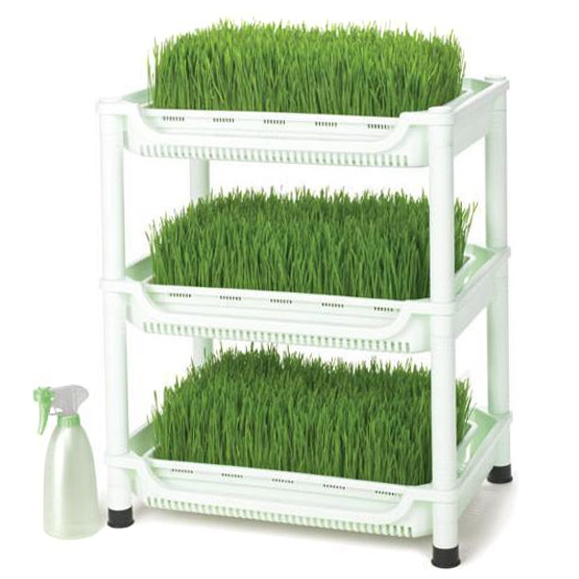 Проращиватели Проращиватель Tribest Wheatgrass Grower Set SM-350 Проращиватель_Tribest_Wheatgrass_Grower_Set_SM-350.jpg