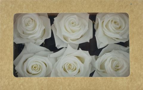 Стабилизированный Бутон Розы Optimum Flowers Standart . Цвет Белый (Диаметр 7см)
