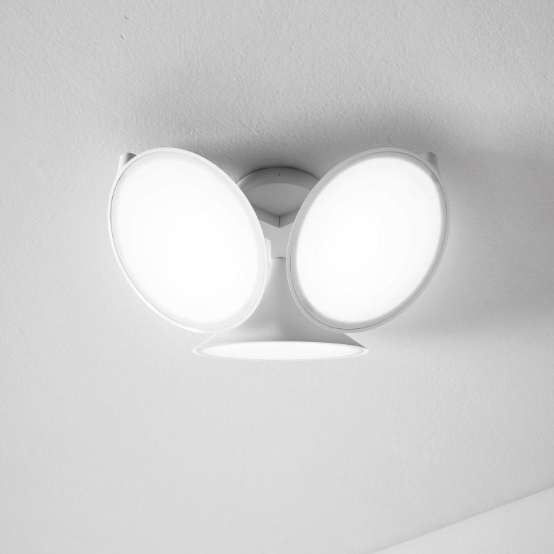 Axo Light Orchid