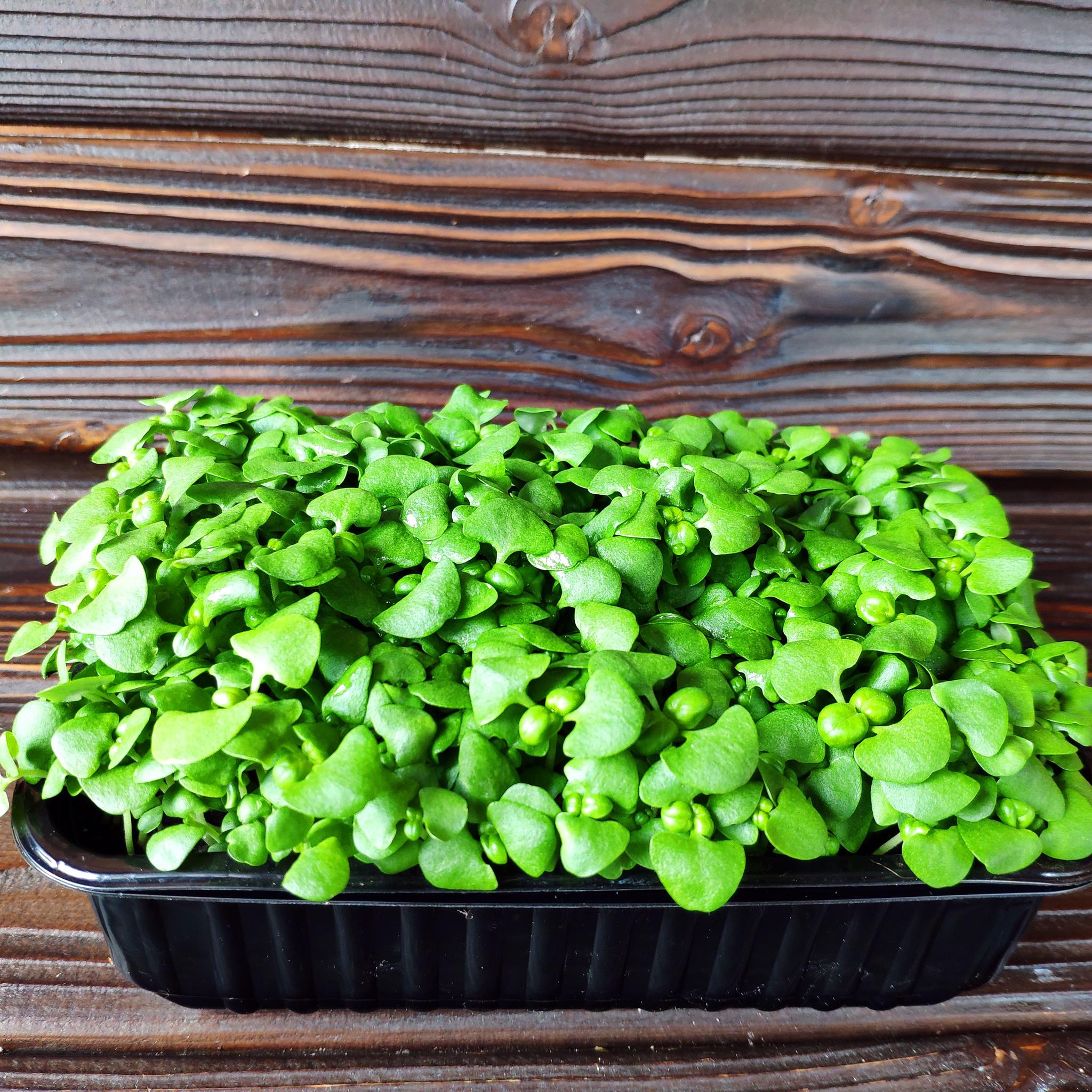 Фотография Базилик зеленый на корне (лоток) / 20 гр купить в магазине Афлора