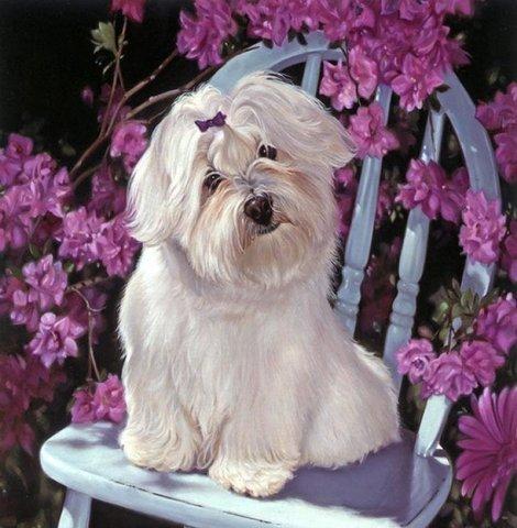 Алмазная Мозаика 40x50 Белая собака сидит на стуле