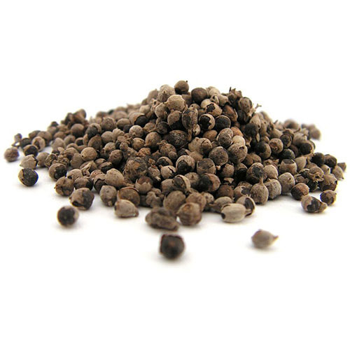 Травы Витекс священный, семена vitex-seed-134.jpg