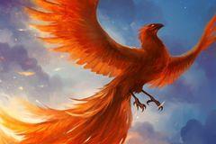 Картина раскраска по номерам 40x50 Размах крыльев оранжевой птицы