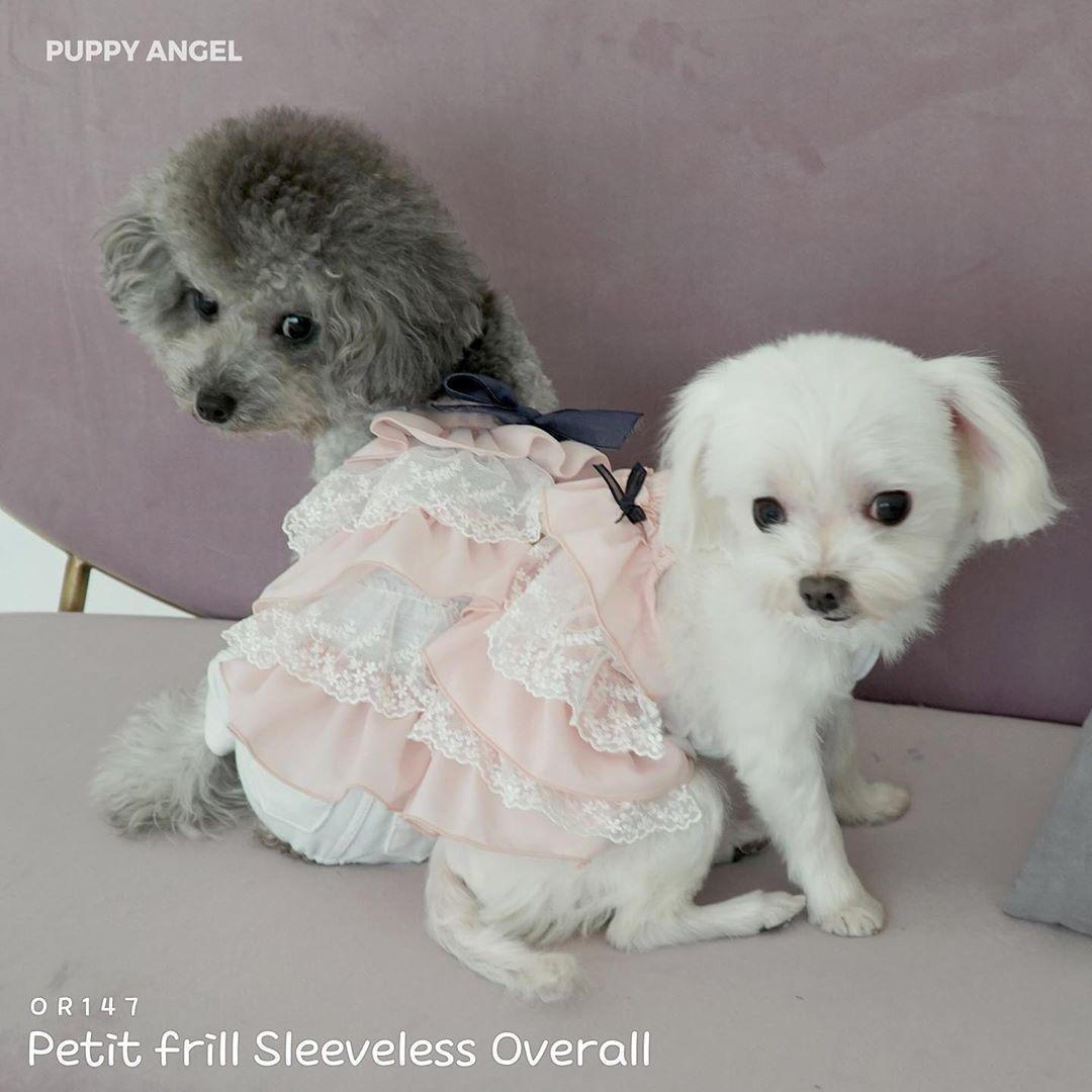 купить одежду для собак puppyangel