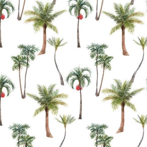 Пальмы  на белом фоне