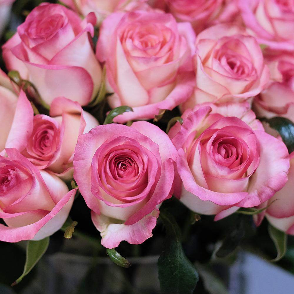 Букет 21 двухцветная роза Jumilia