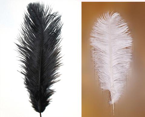 Перья страуса  декоративные БРАК! 45-50 см. (цена за 1 шт.) , (выберите цвет)