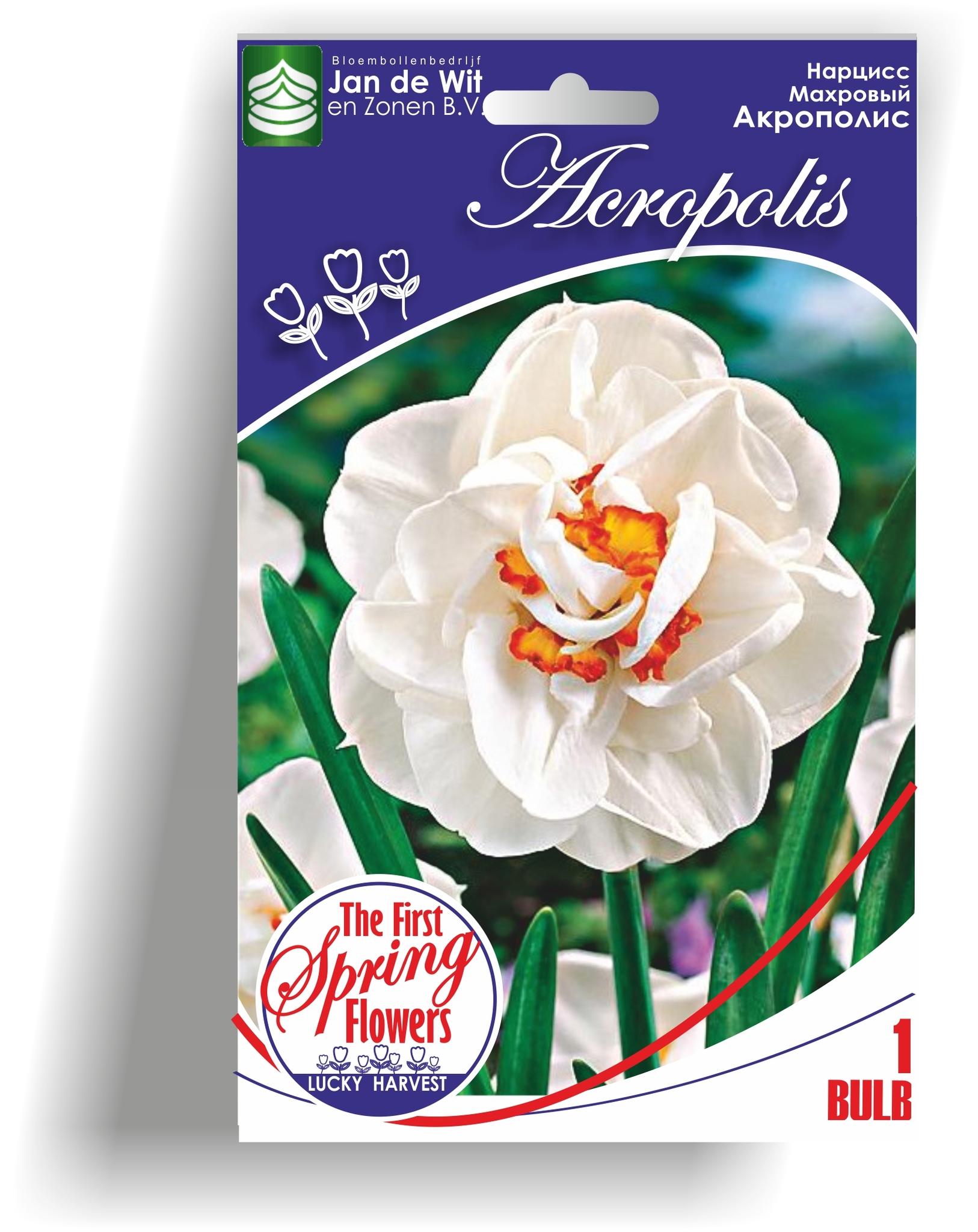 Нарцисс махровый Acropolis (Акрополис)  Jan de Wit en Zonen B.V.