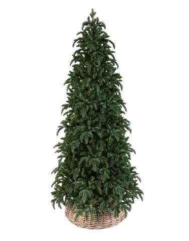 Triumph Tree ель Нормандия стройная 1,55 м