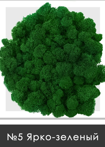 Стабилизированный мох (ягель) цвет №5  Ярко зеленый