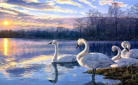 Алмазная Мозаика 40x50 Лебеди на закате в озере (арт. S1833 )
