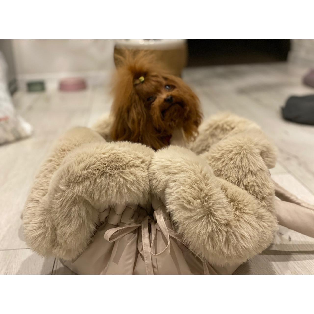 теплые сумки для собак