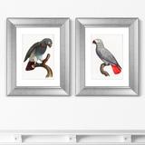 Джон Гульд - Диптих Beautiful parrots №2, 1872г. (из 2-х картин)