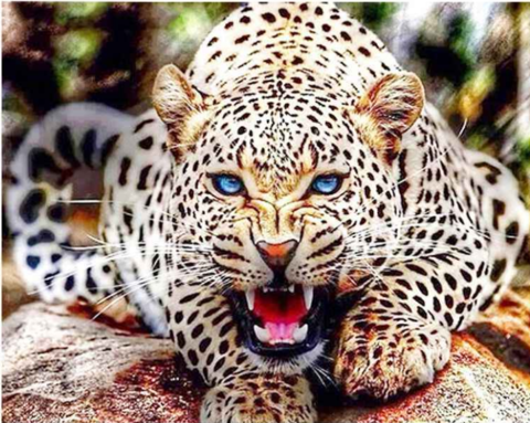 Алмазная Мозаика 30x40 Леопард скалится (арт. MTC73599)