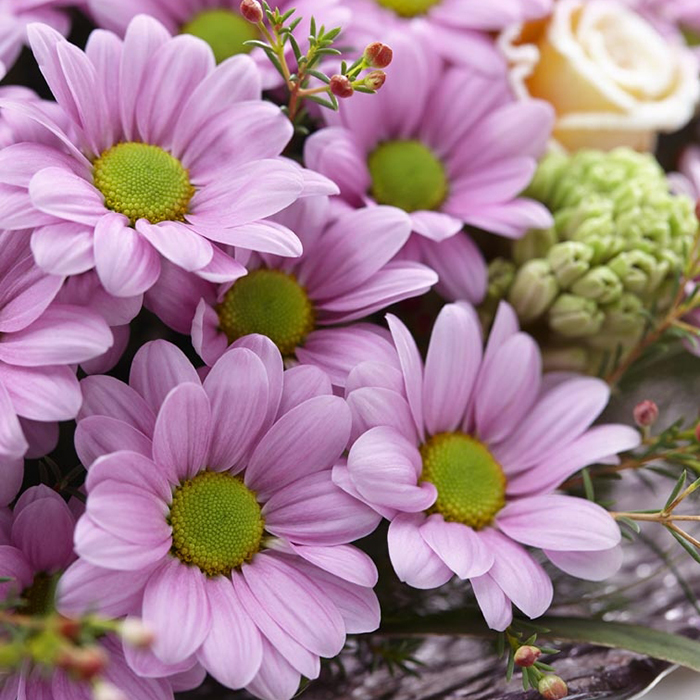 Купить хризантемы ромашковые нежно-розовые в Перми