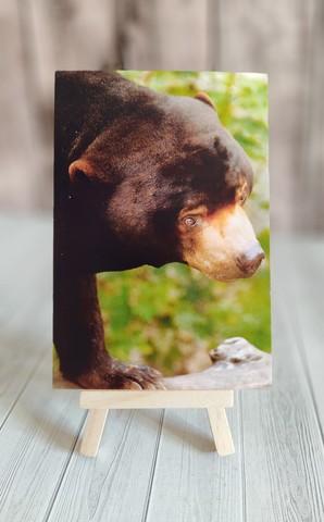 Малайский медведь 2