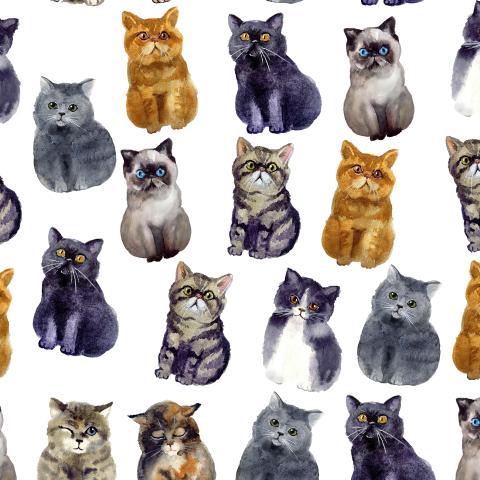 Акварельные котики