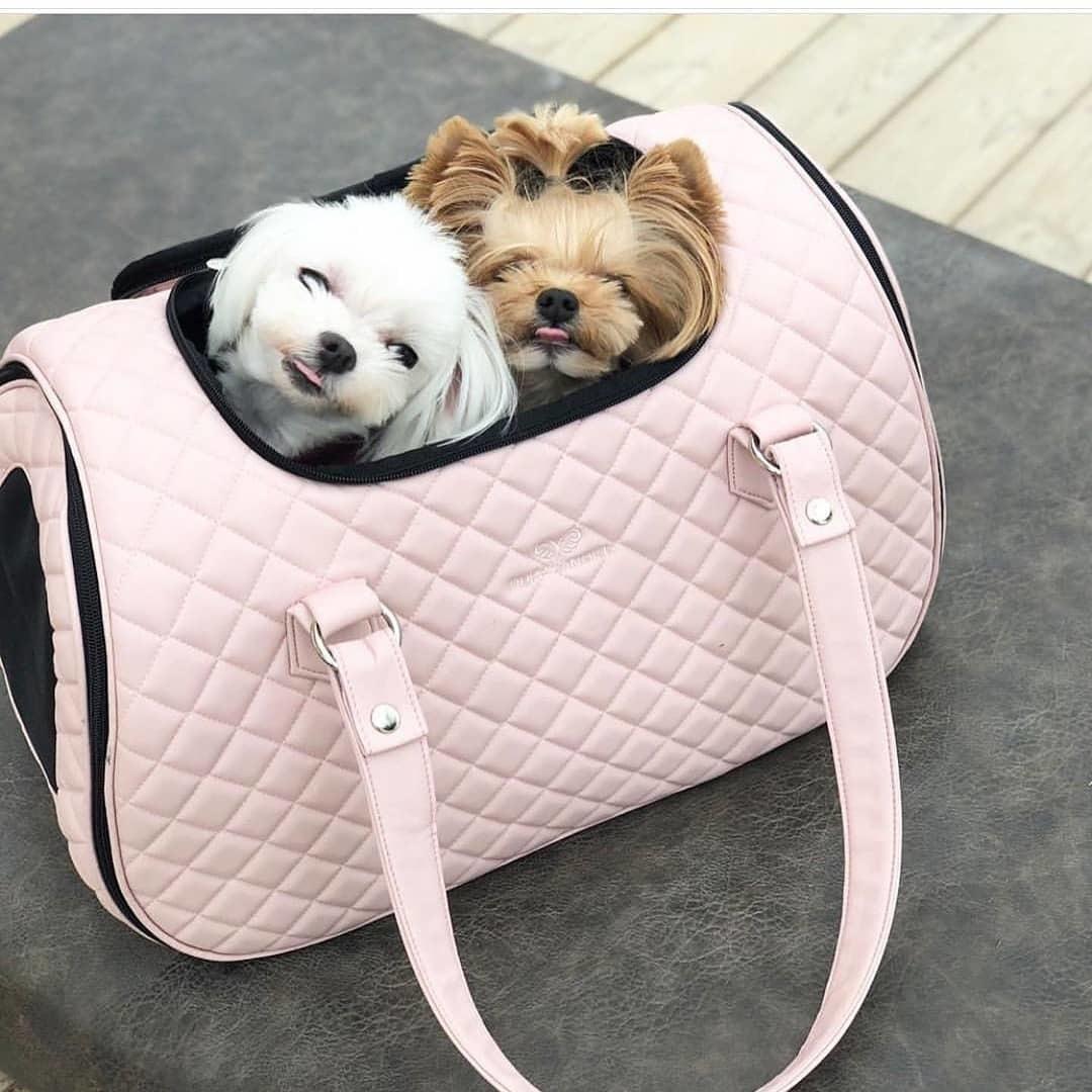 сумка для самолета для маленьких собачек