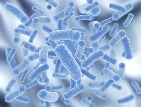 Фильтрат ферментированных лактобактерий йогурта, 5гр - 2000тг