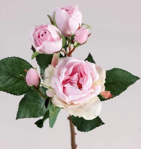 Роза розовая-3 цветка с бутонами