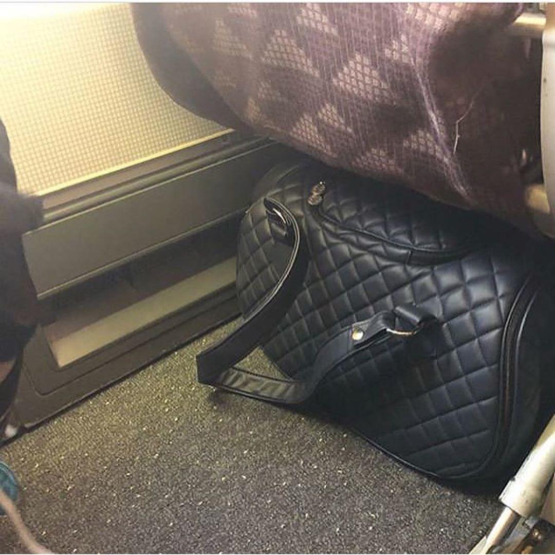 сумка для собаки в салоне самолета