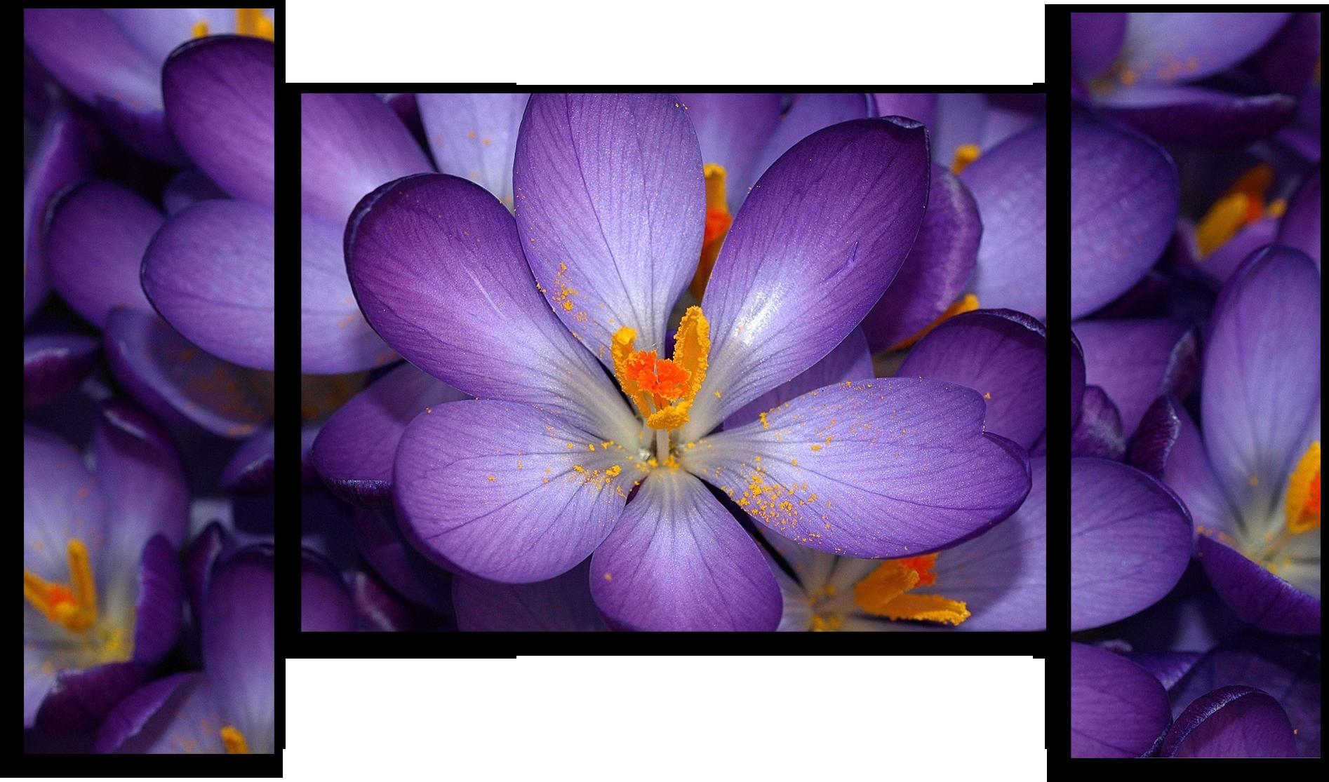 """Модульные картины Модульная картина """"Сиреневые цветы"""" М291.png"""