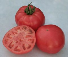 Ролекс F1 семена томата индетерминантного (Гавриш)