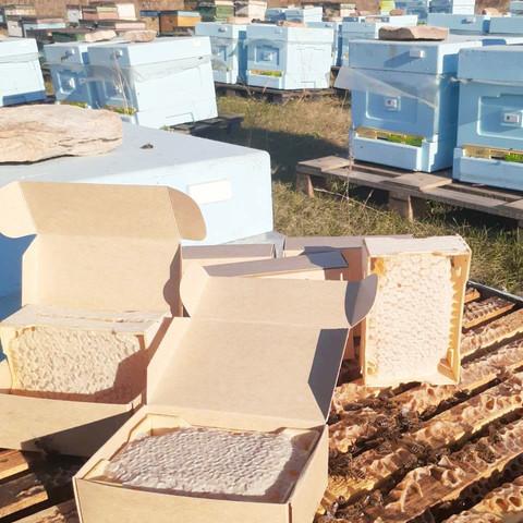 Сотовый мёд 2021 в минирамках 1 кг 1 сорт