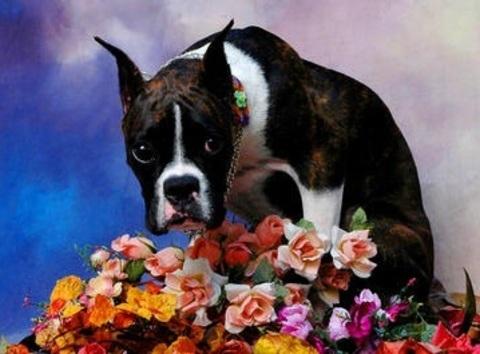 Алмазная Мозаика 40x50 Собака и цветы (арт. 2PAV726)