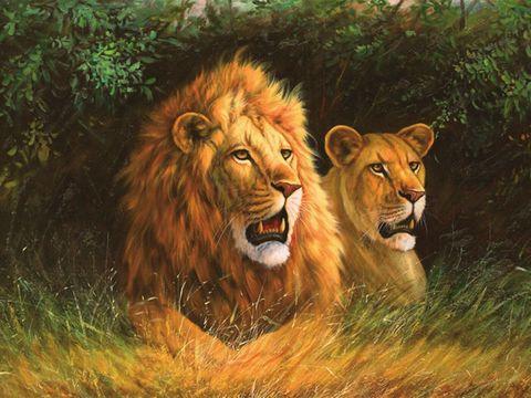Алмазная Мозаика 30x40 Лев и львица отдыхают в тени (арт. GB70141)