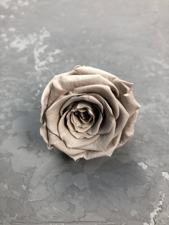 Роза классическая мокка d=5,5 см