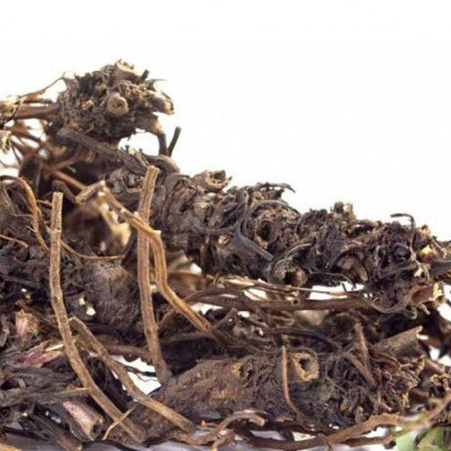 Травы Гравилат городской geum-175.jpg