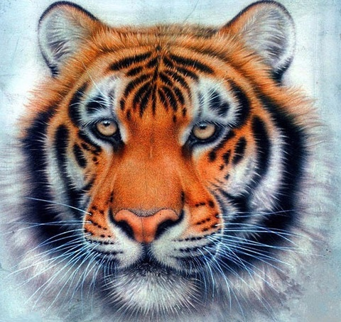 Алмазная Мозаика 5D 40x50 Морда тигра (арт. 2PAVDD406)